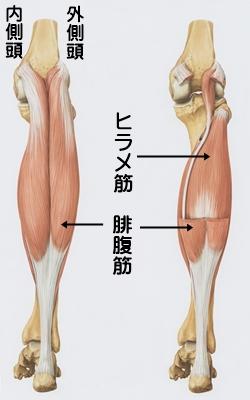 musclestrain001
